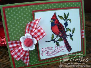 Gingham Cardinal 2